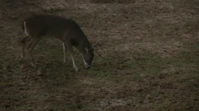 Mossy Oak's Country Roots - Oklahoma Archery Whitetail