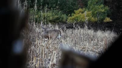 Preview the episode of Whitetail Freaks for the week of 03/06/2017