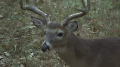 Episode 419: The Bucks of Tecomate Clip 1 Sneak Peek -