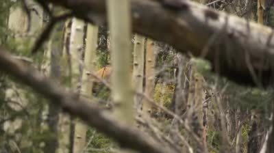Preview the episode of Trophy Hunters TV for the week of 03/13/2017