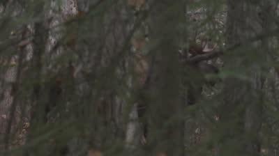 Episode 602: Shawn Michaels' MRA Sneak Peek -