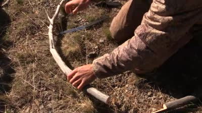 Eastmans' Hunting TV - Removing Elk Ivories Tip