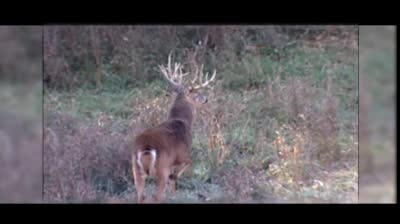 Whitetail Freaks - Haas And the Freak Buck